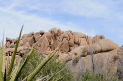 δέντρο βράχων joshua Στοκ Φωτογραφίες