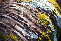 δέντρο βρύου κούτσουρων μυκήτων Στοκ Εικόνες