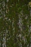 δέντρο βρύου χρώματος κίτρινο Στοκ Φωτογραφία