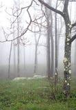 δέντρο β ελαφριάς ομίχλης Στοκ Φωτογραφίες