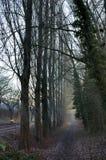 Δέντρο για την πορεία Στοκ εικόνα με δικαίωμα ελεύθερης χρήσης
