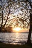 δέντρο γνώσης Στοκ εικόνα με δικαίωμα ελεύθερης χρήσης