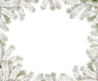 δέντρο γουνών πλαισίου κ&lam Στοκ Εικόνες