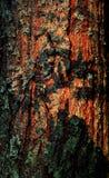 δέντρο γουνών φλοιών Στοκ εικόνα με δικαίωμα ελεύθερης χρήσης
