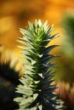 Δέντρο γρίφων πιθήκων Στοκ φωτογραφία με δικαίωμα ελεύθερης χρήσης