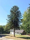 Δέντρο γρίφων πιθήκων Στοκ εικόνες με δικαίωμα ελεύθερης χρήσης