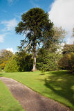 Δέντρο γρίφων πιθήκων Στοκ Εικόνα