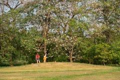 Δέντρο γυναικών και sakura στο πάρκο Στοκ Φωτογραφίες