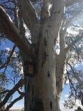 Δέντρο γόμμας με το σπίτι πουλιών Στοκ Εικόνα