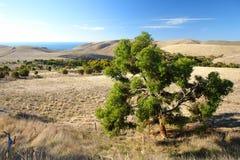 δέντρο γόμμας στοκ φωτογραφία με δικαίωμα ελεύθερης χρήσης
