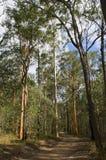 Δέντρο γόμμας στοκ φωτογραφίες