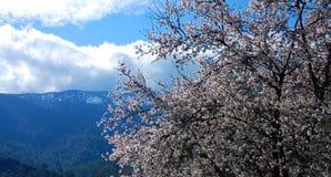 δέντρο δαμάσκηνων στοκ εικόνα