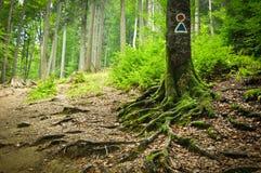 δέντρο δεικτών Στοκ εικόνες με δικαίωμα ελεύθερης χρήσης