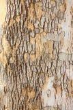 δέντρο δερμάτων Στοκ φωτογραφία με δικαίωμα ελεύθερης χρήσης