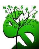 δέντρο δολαρίων δολαρίων Στοκ Εικόνες