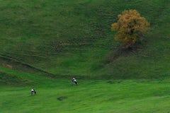 δέντρο δύο αγελάδων Στοκ φωτογραφίες με δικαίωμα ελεύθερης χρήσης