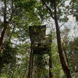 Δέντρο εδρών στοκ φωτογραφίες