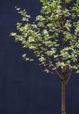 Δέντρο δειγμάτων Στοκ Εικόνες