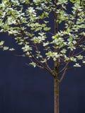 Δέντρο δειγμάτων Στοκ Φωτογραφίες