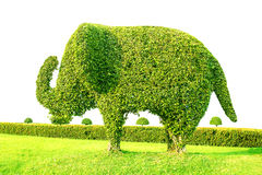 Δέντρο ελεφάντων Στοκ Φωτογραφία