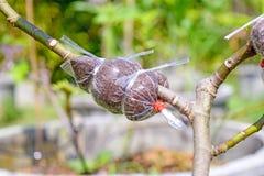 Δέντρο εμβολίου Στοκ Φωτογραφίες