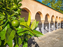 Δέντρο λεμονιών με την αραβική αρχιτεκτονική αψίδων Στοκ Φωτογραφία