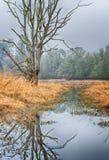 Δέντρο εμπλοκών που απεικονίζει στο νερό στοκ φωτογραφία με δικαίωμα ελεύθερης χρήσης