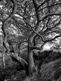 Δέντρο ενάντια σε έναν τοίχο ξηρών πετρών στοκ εικόνες