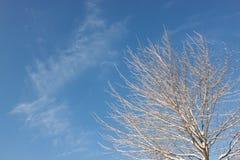 Δέντρο ενάντια στον ουρανό. Στοκ εικόνα με δικαίωμα ελεύθερης χρήσης