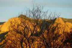 Δέντρο ενάντια στο βουνό Sandia μουτζουρωμένο στοκ εικόνα
