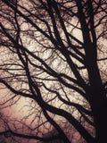 Δέντρο ενάντια στο ρόδινο ουρανό στοκ εικόνες
