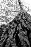 δέντρο επάνω σας Στοκ Φωτογραφίες