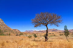 Δέντρο επιφύλαξης της Anja Στοκ Φωτογραφίες
