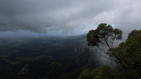 Δέντρο ευκαλύπτων πρωινού της Misty, Jamberoo Νότια Νέα Ουαλία Στοκ φωτογραφία με δικαίωμα ελεύθερης χρήσης