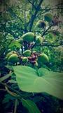 Δέντρο ελεφάντων Στοκ φωτογραφίες με δικαίωμα ελεύθερης χρήσης