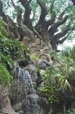 δέντρο ζωής Στοκ Εικόνες