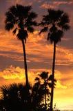 δέντρο ηλιοβασιλέματος σκιαγραφιών φοινικών Στοκ φωτογραφία με δικαίωμα ελεύθερης χρήσης