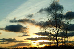 δέντρο ηλιοβασιλέματος σκιαγραφιών Στοκ Εικόνες