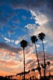 δέντρο ηλιοβασιλέματος φοινικών Στοκ Φωτογραφίες