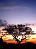 δέντρο ηλιοβασιλέματος 0 Στοκ Εικόνα