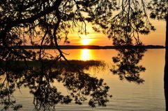 δέντρο ηλιοβασιλέματος Στοκ Εικόνες