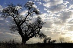 δέντρο ηλιοβασιλέματος Στοκ Εικόνα