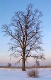 δέντρο ηλιοβασιλεμάτων στοκ φωτογραφία με δικαίωμα ελεύθερης χρήσης