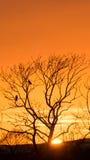 Δέντρο ηλιοβασιλέματος με τους κόρακες - κατακόρυφος Στοκ Φωτογραφία