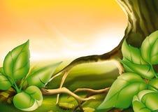 δέντρο θάμνων Στοκ φωτογραφία με δικαίωμα ελεύθερης χρήσης