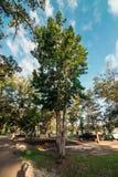 Δέντρο θέσεων για κατασκήνωση της Λουιζιάνας στοκ εικόνα