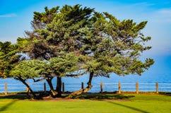 Δέντρο θαλασσίως Στοκ φωτογραφία με δικαίωμα ελεύθερης χρήσης