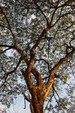 δέντρο θόλων στοκ φωτογραφία με δικαίωμα ελεύθερης χρήσης