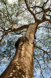 Δέντρο θόλων στοκ εικόνες με δικαίωμα ελεύθερης χρήσης