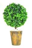 Δέντρο διακοσμήσεων για το εγχώριο ντεκόρ Στοκ εικόνα με δικαίωμα ελεύθερης χρήσης